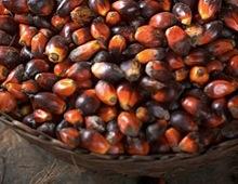semi di cacao Fairtrade