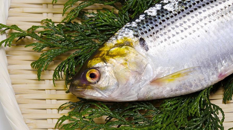 Ricetta pesci in carpione il giornale del cibo for Cibo per pesci tropicali