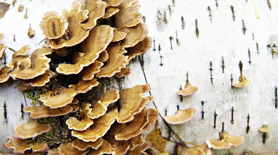 Dove trattare un fungo di gambe in Mosca