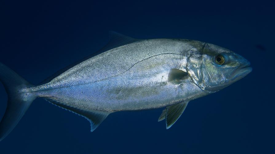 Pesce di stagione a marzo cosa comprare for Comprare pesci