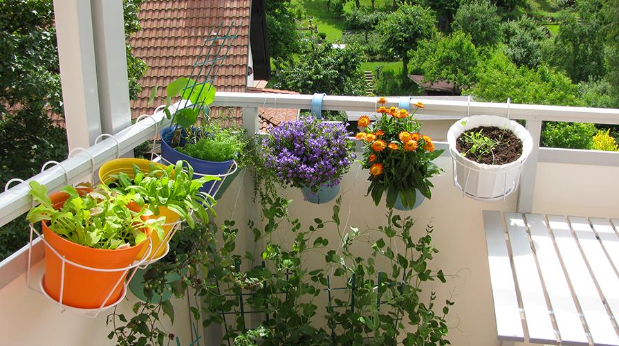 Orto sul balcone: Quali contenitori scegliere - Giornale del cibo