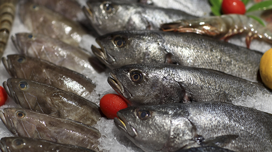 Ricette con i pesci di acqua dolce giornale del cibo for Pesci acqua dolce commestibili