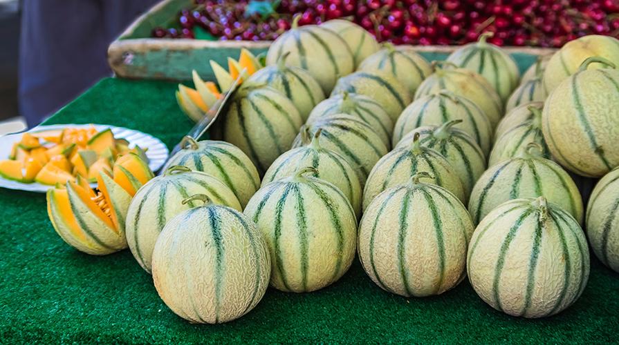 Melone giornale del cibo for Pianta di melone