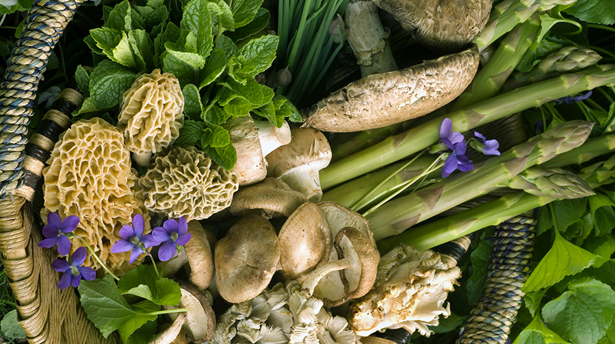 Piante Mediterranee Selvatiche : Piante selvatiche commestibili quali sono e dove raccoglierle