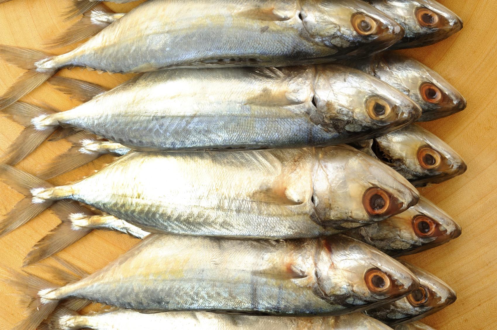 Pesce d 39 aprile quali specie comprare for Comprare pesci