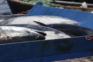 Comprare il pesce giornale del cibo for Comprare pesci