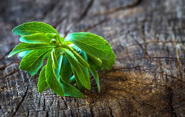 Stevia coltivazione il vostro dolcificante naturale homemade for Stevia pianta