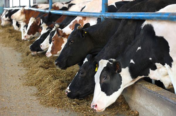 Farmageddon il libro inchiesta sugli allevamenti intensivi for Costo di costruzione moderno della fattoria