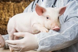 Antibiotici allevamenti