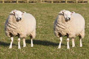 Clonazione animale