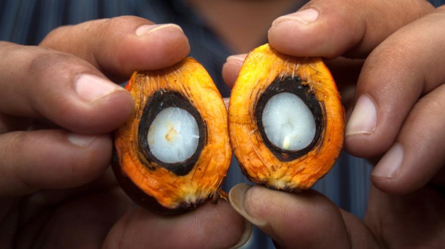 Olio di palma cancerogeno il parere dell 39 efsa - Storia di palma domenica ks1 ...