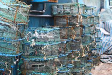 pesca illegale