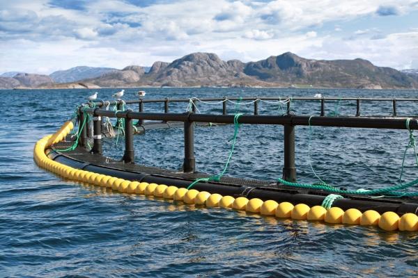 Pesce allevato ci sono aspetti positivi per la salute for Allevamento pesci