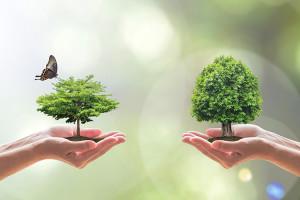 Alimentazione Vegetariana Sostenibile