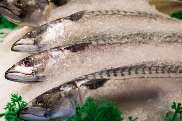 Pesce crudo intossicazione