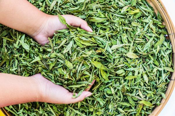 La stevia fa male propriet e informazioni sul pi famoso for Stevia pianta