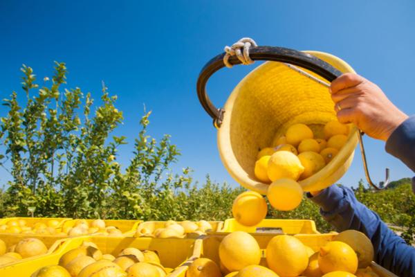 limoni calabria