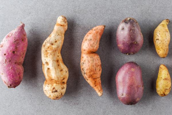Tipi di patate caratteristiche e preparazioni pi adatte for Quando seminare le patate