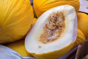 melone invernale